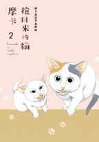 撿回來的貓 摩卡 (2)