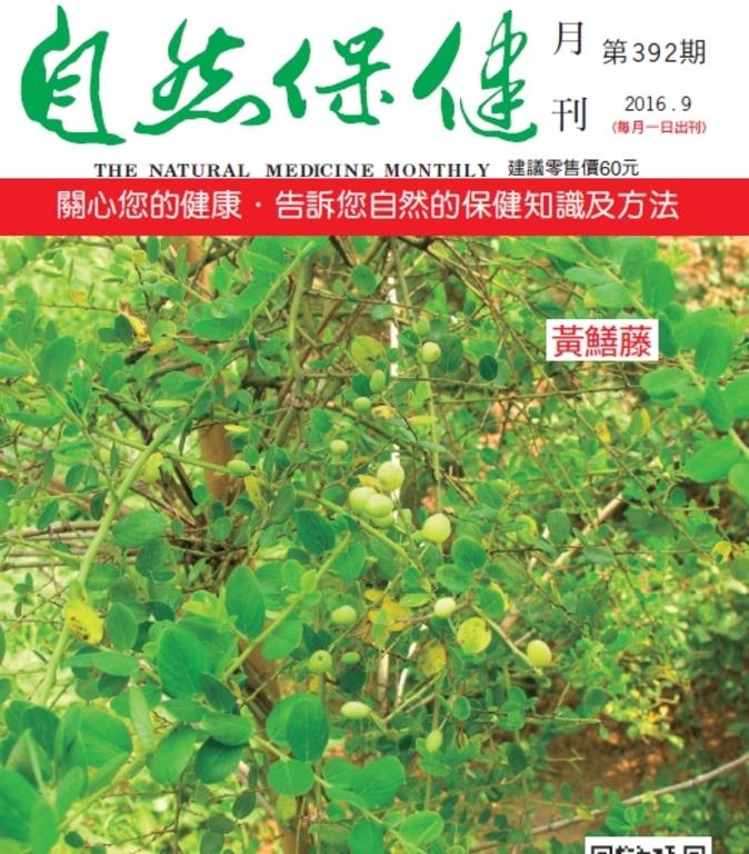 自然保健月刊392期 小葉黃鱔藤